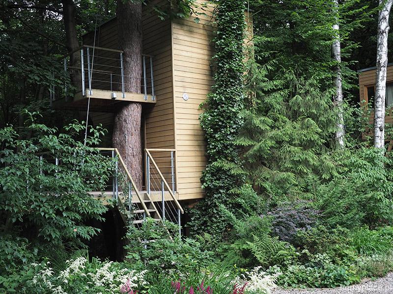 schowany ww lesie